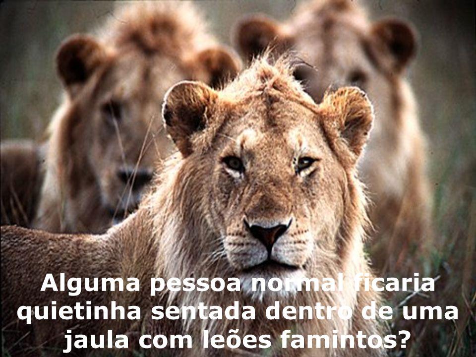 Alguma pessoa normal ficaria quietinha sentada dentro de uma jaula com leões famintos