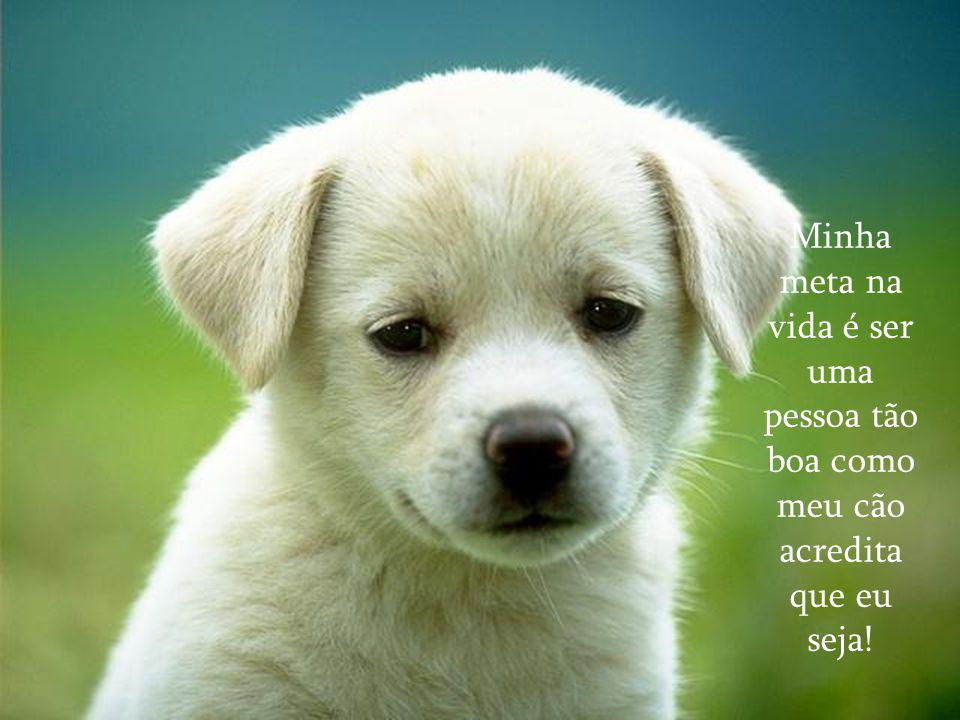Minha meta na vida é ser uma pessoa tão boa como meu cão acredita que eu seja!