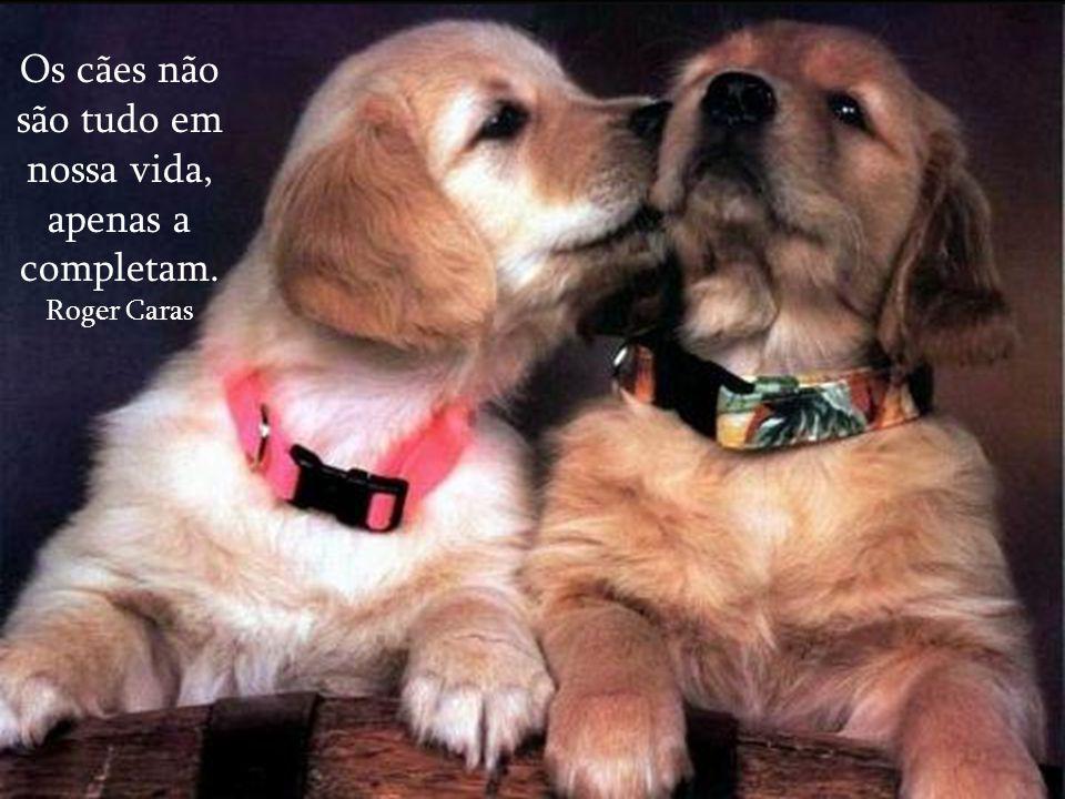 Os cães não são tudo em nossa vida, apenas a completam.