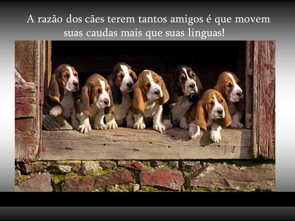 A razão dos cães terem tantos amigos é que movem