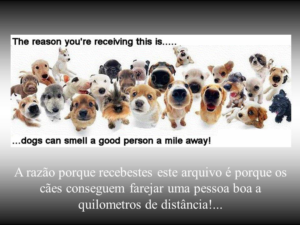 A razão porque recebestes este arquivo é porque os cães conseguem farejar uma pessoa boa a quilometros de distância!...