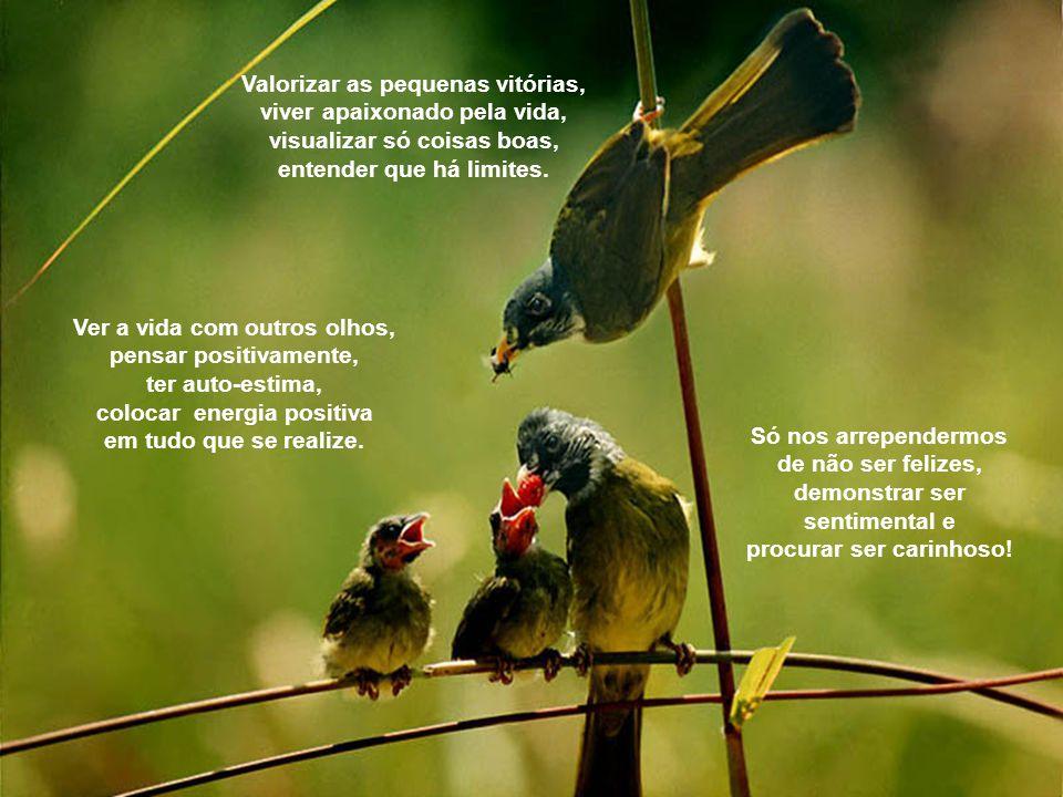 Valorizar as pequenas vitórias, viver apaixonado pela vida,