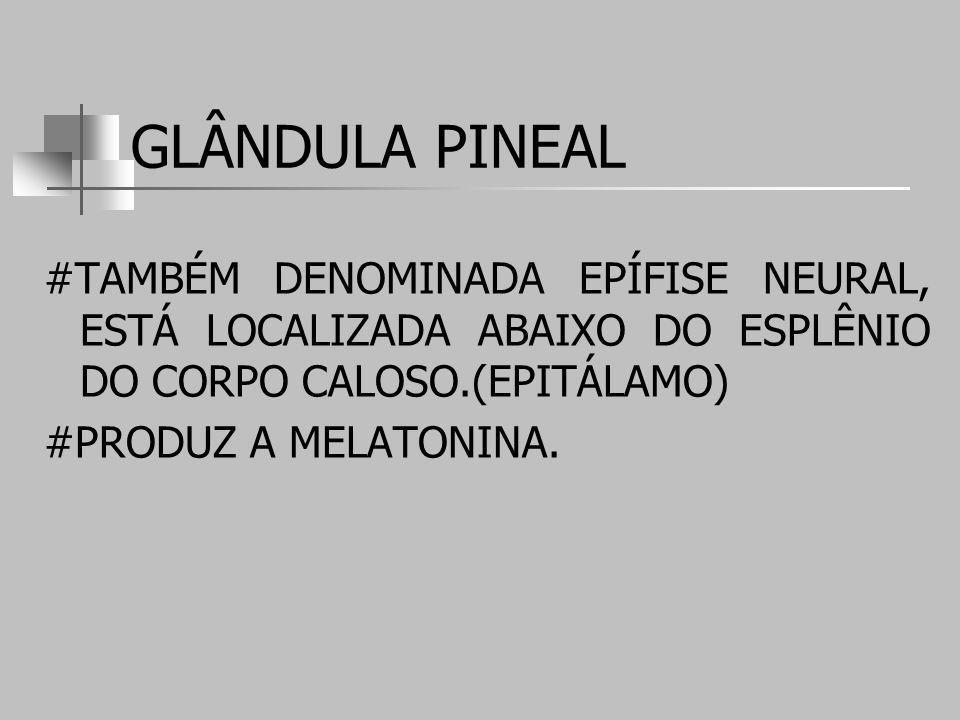 GLÂNDULA PINEAL #TAMBÉM DENOMINADA EPÍFISE NEURAL, ESTÁ LOCALIZADA ABAIXO DO ESPLÊNIO DO CORPO CALOSO.(EPITÁLAMO)