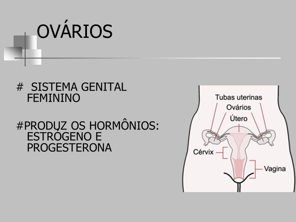 OVÁRIOS # SISTEMA GENITAL FEMININO