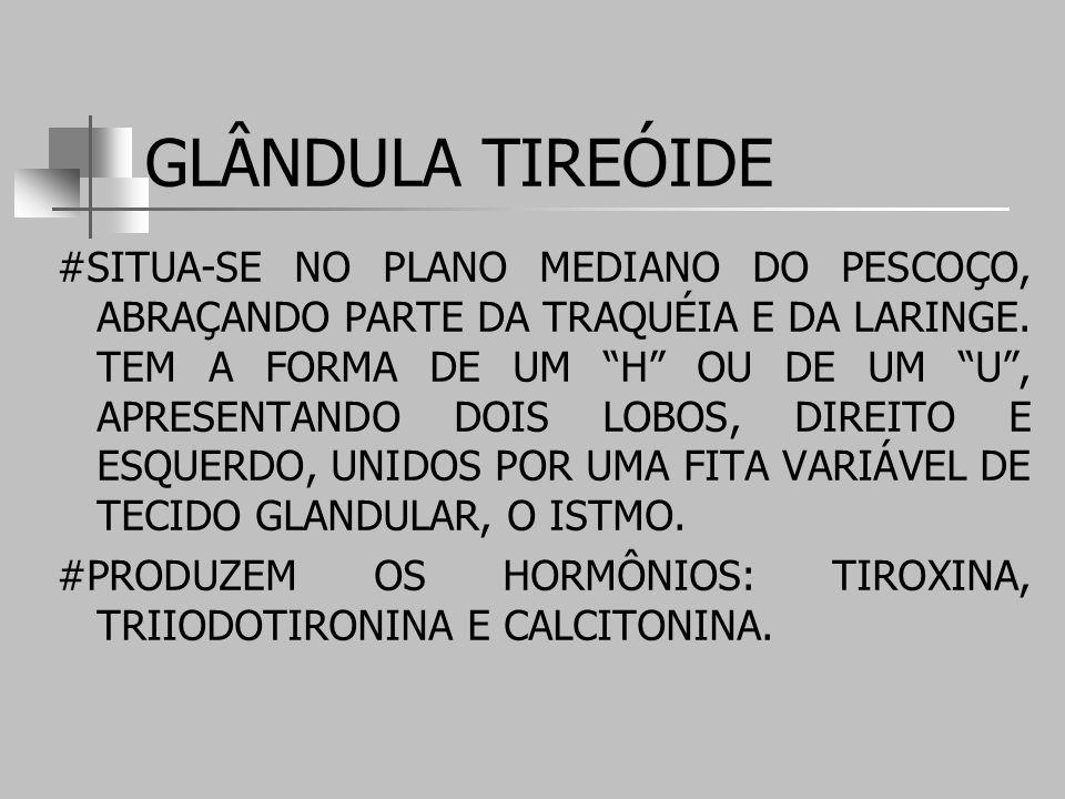 GLÂNDULA TIREÓIDE