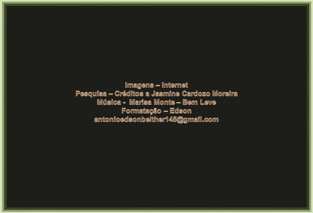 Pesquisa – Créditos a Jasmine Cardozo Moreira