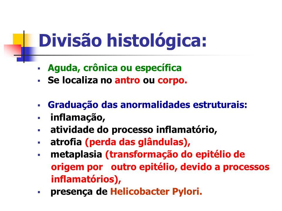 Divisão histológica: Aguda, crônica ou específica