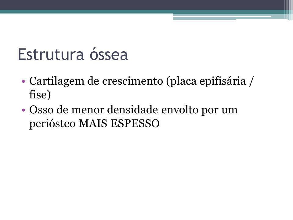 Estrutura óssea Cartilagem de crescimento (placa epifisária / fise)