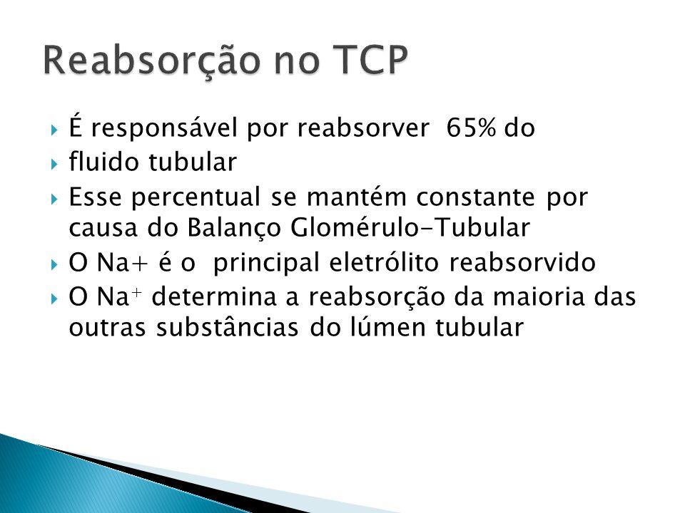 Reabsorção no TCP É responsável por reabsorver 65% do fluido tubular