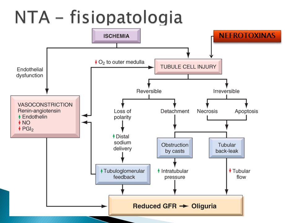 NTA - fisiopatologia NEFROTOXINAS
