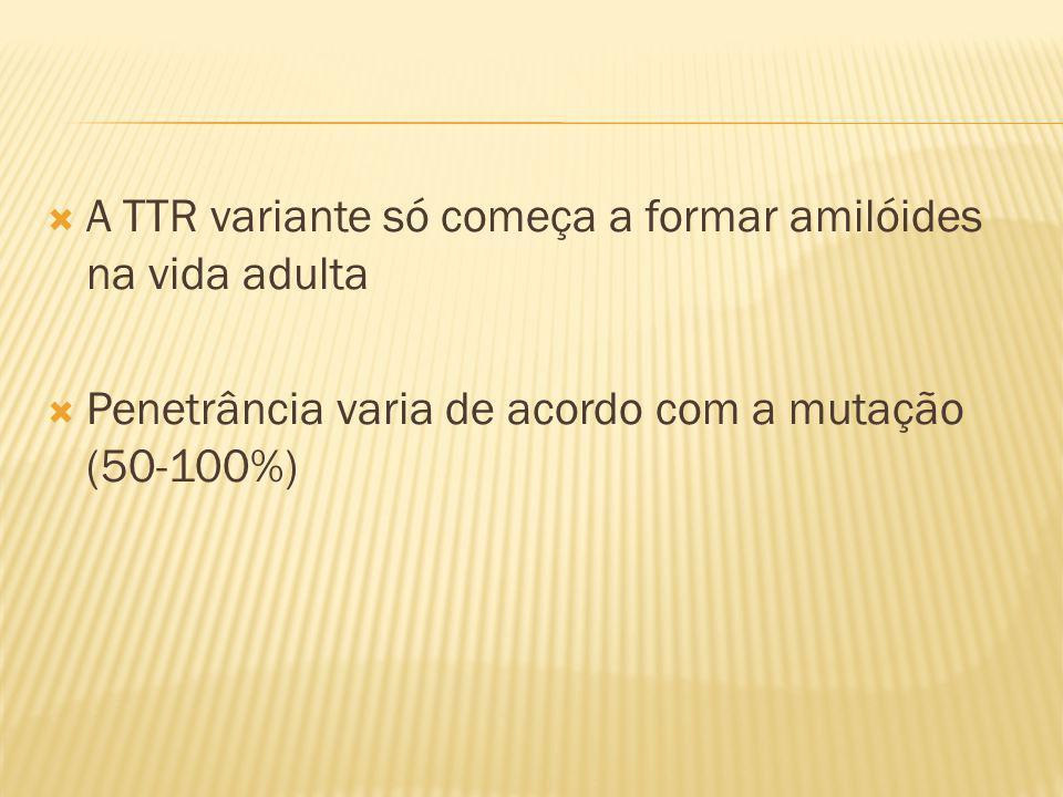 A TTR variante só começa a formar amilóides na vida adulta