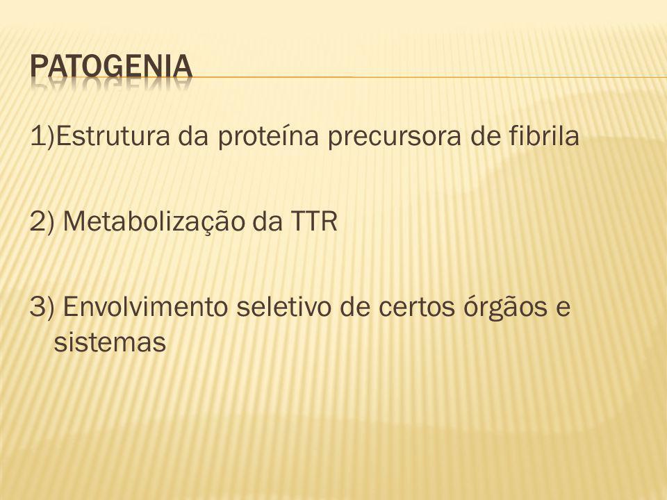 Patogenia 1)Estrutura da proteína precursora de fibrila 2) Metabolização da TTR 3) Envolvimento seletivo de certos órgãos e sistemas