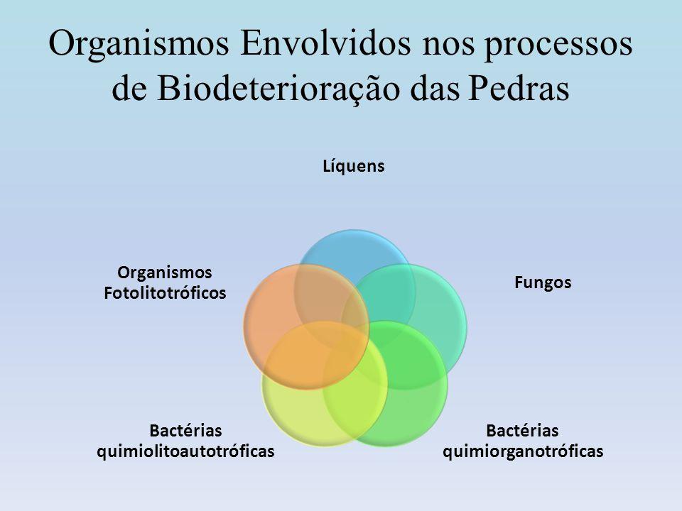 Organismos Envolvidos nos processos de Biodeterioração das Pedras