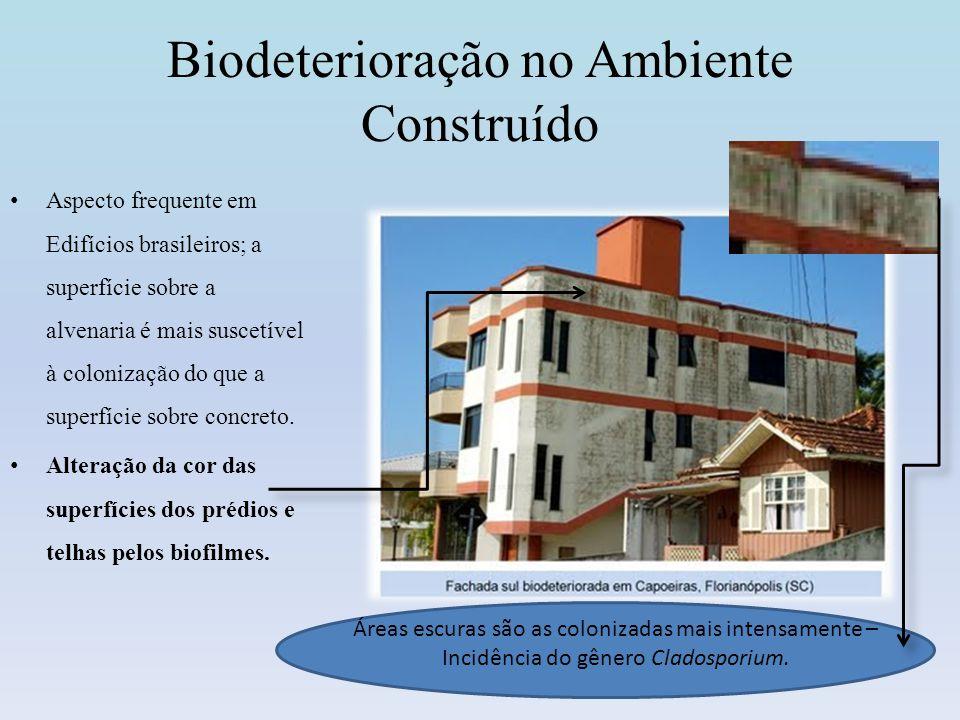 Biodeterioração no Ambiente Construído