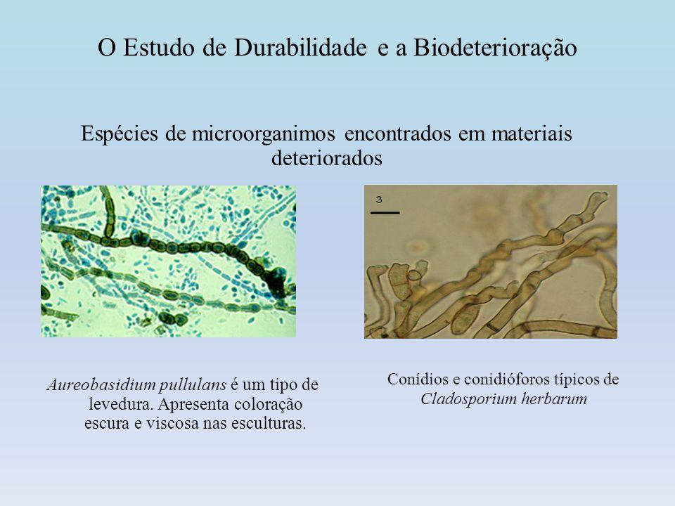 O Estudo de Durabilidade e a Biodeterioração