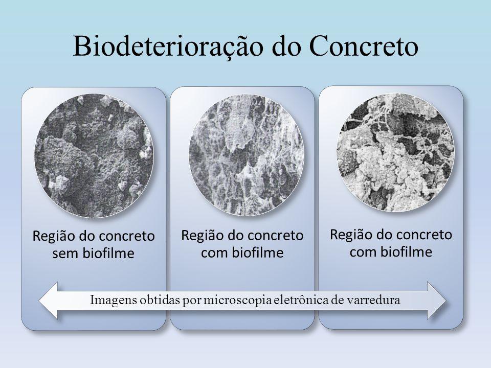 Biodeterioração do Concreto