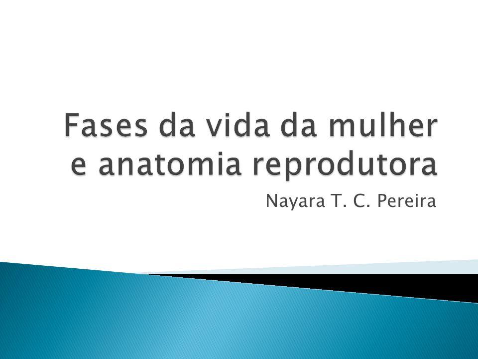 Fases da vida da mulher e anatomia reprodutora