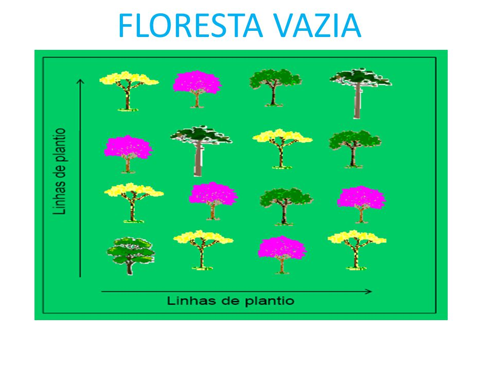 FLORESTA VAZIA