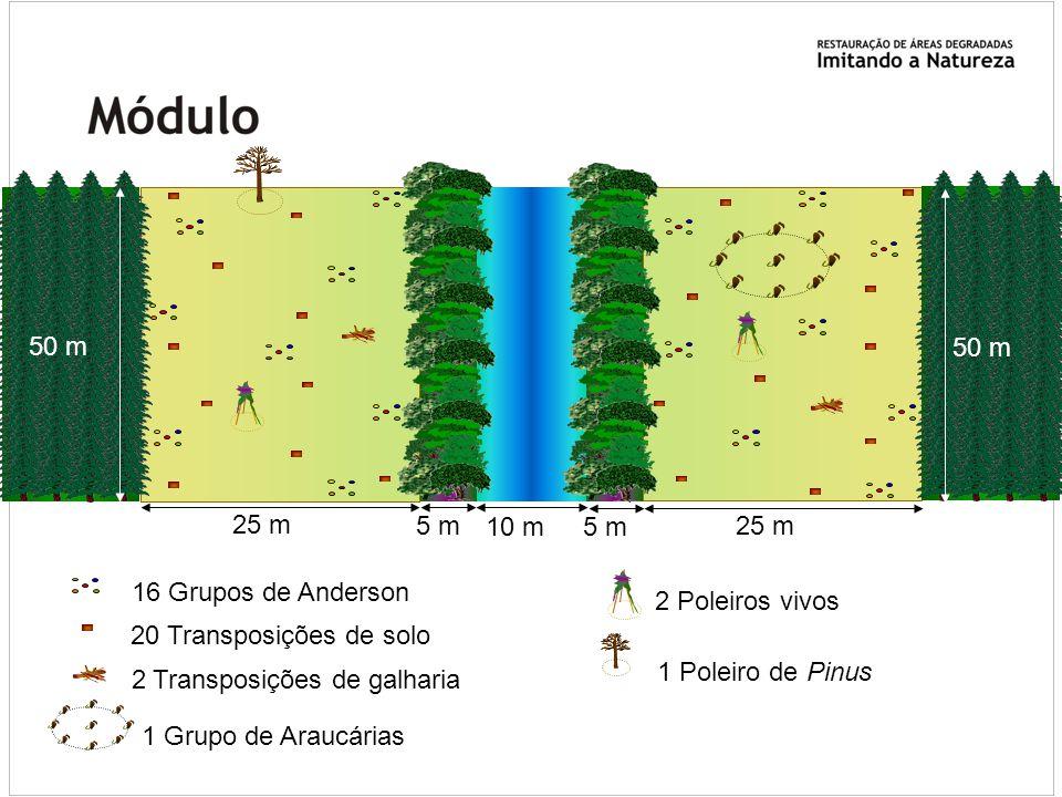25 m 50 m. 1 Grupo de Araucárias. 5 m. 10 m. 16 Grupos de Anderson. 2 Poleiros vivos. 20 Transposições de solo.