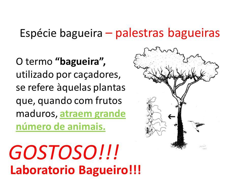 GOSTOSO!!! Laboratorio Bagueiro!!!