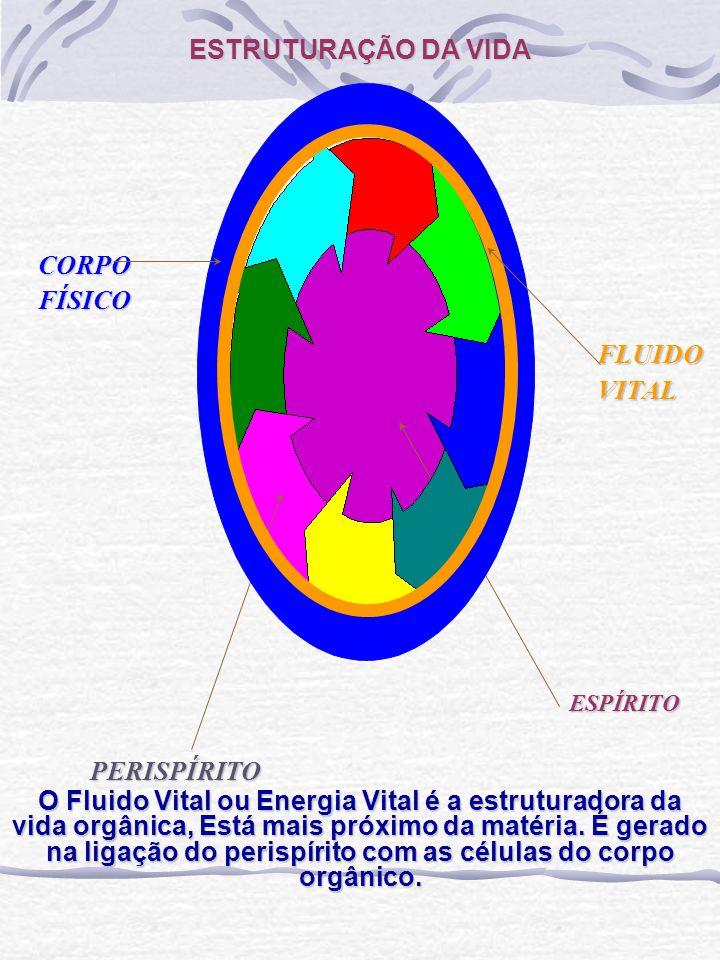 ESTRUTURAÇÃO DA VIDA CORPO FÍSICO FLUIDO VITAL PERISPÍRITO