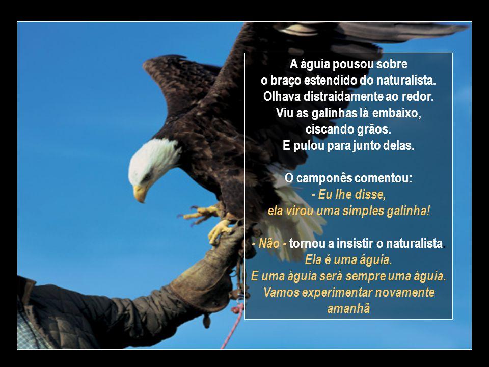 A águia pousou sobre o braço estendido do naturalista