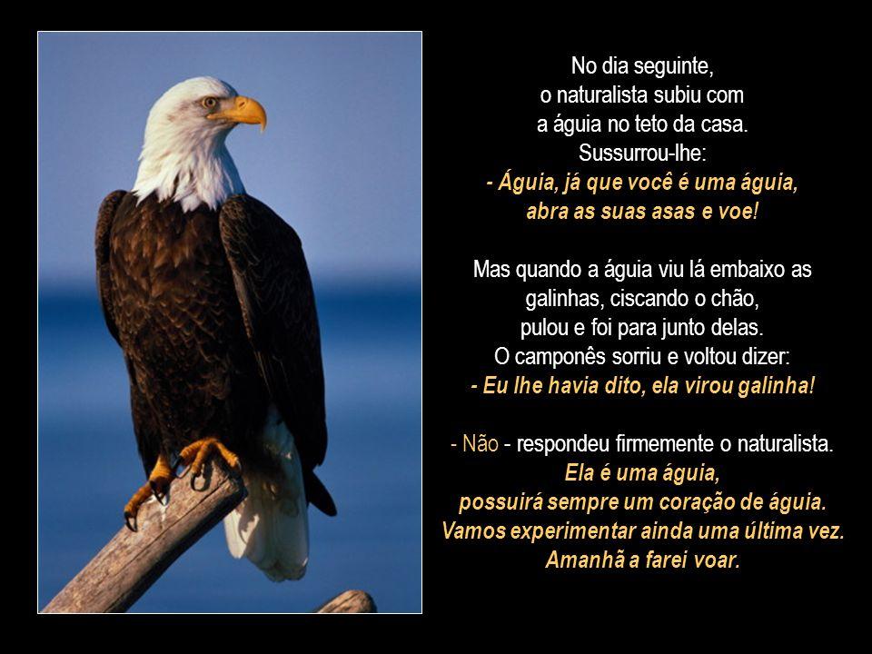 No dia seguinte, o naturalista subiu com a águia no teto da casa