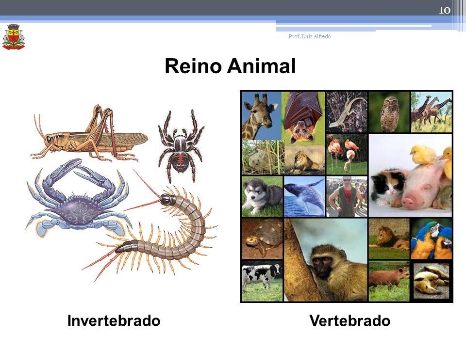 Prof. Luiz Alfredo Reino Animal Invertebrado Vertebrado
