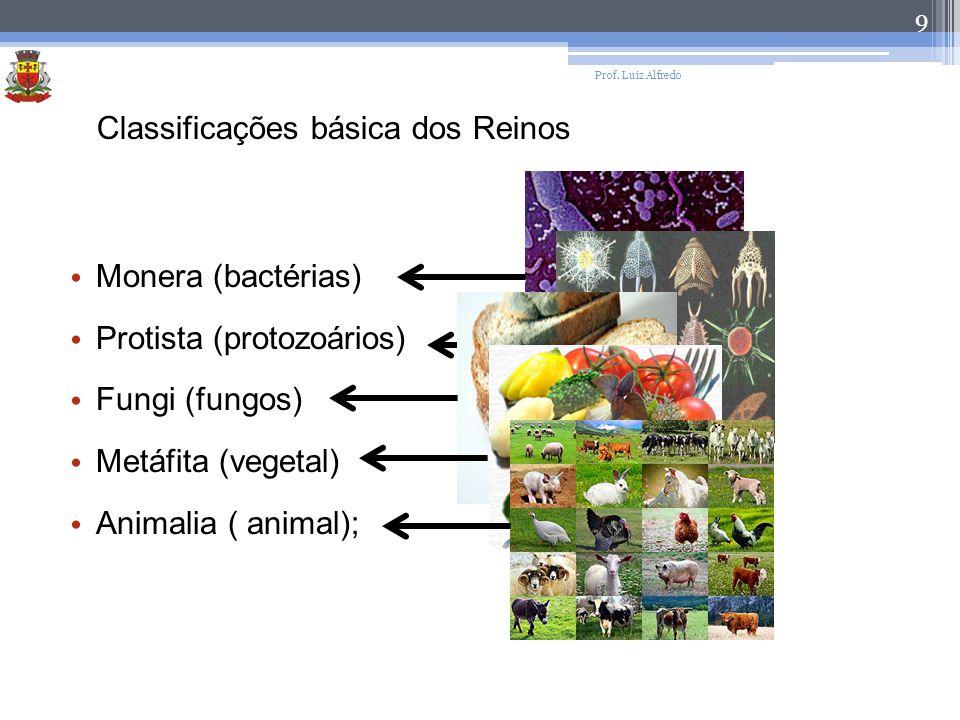 Classificações básica dos Reinos