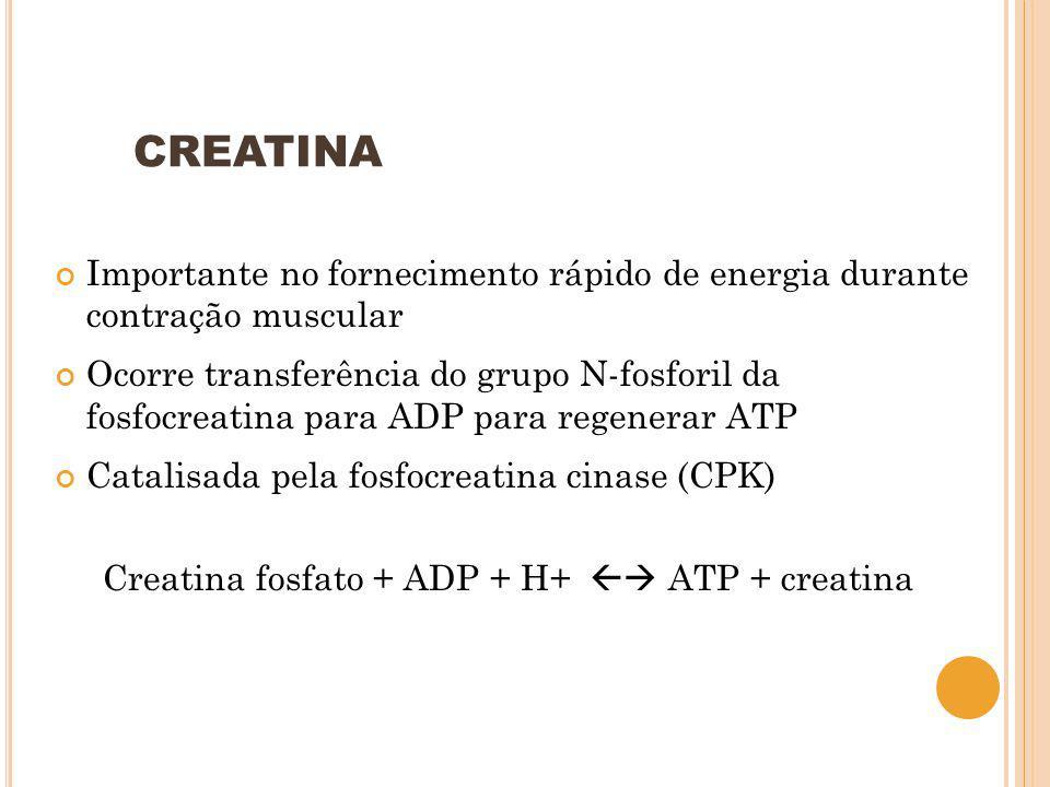CREATINA Importante no fornecimento rápido de energia durante contração muscular.