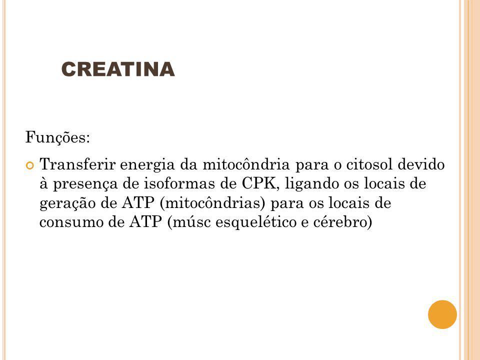 CREATINA Funções: