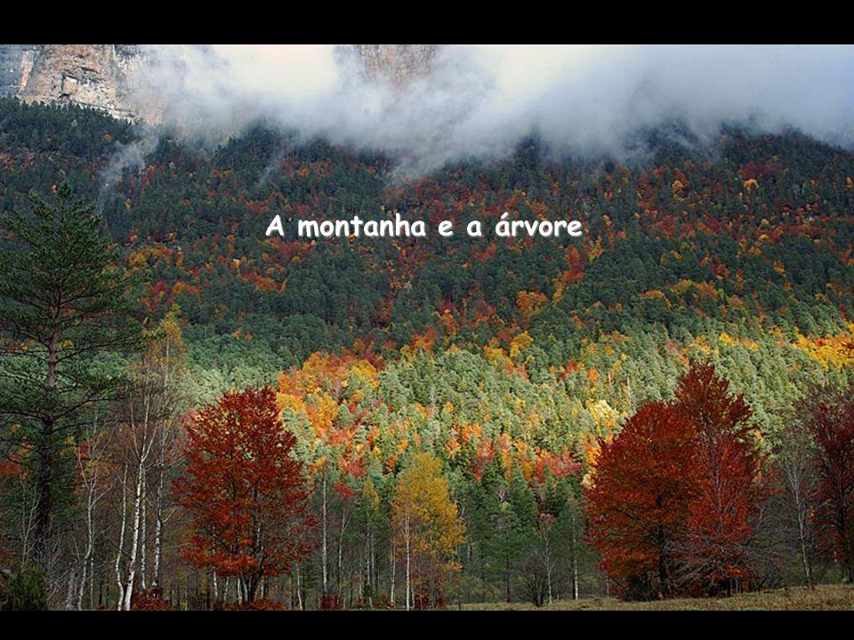 A montanha e a árvore