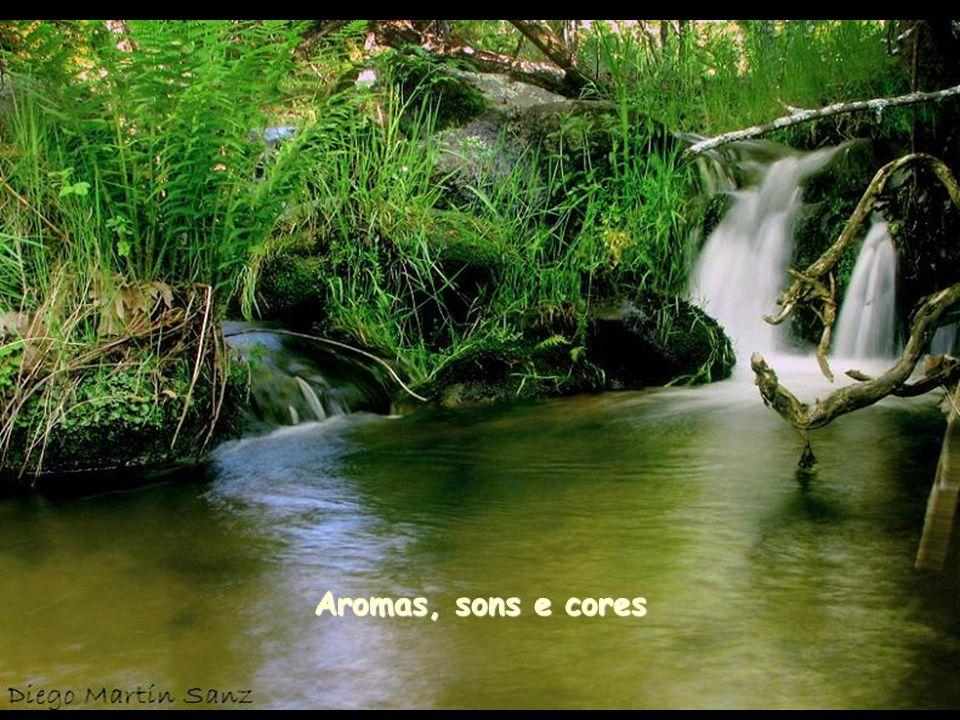 Aromas, sons e cores