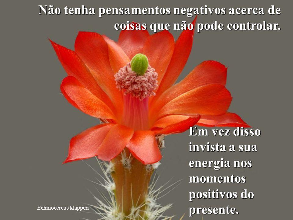 Em vez disso invista a sua energia nos momentos positivos do presente.