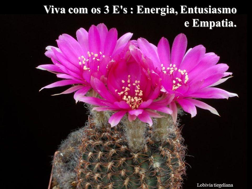 Viva com os 3 E s : Energia, Entusiasmo e Empatia.