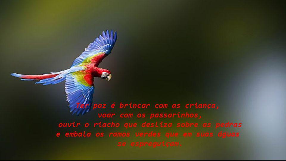 Ter paz é brincar com as criança, voar com os passarinhos,