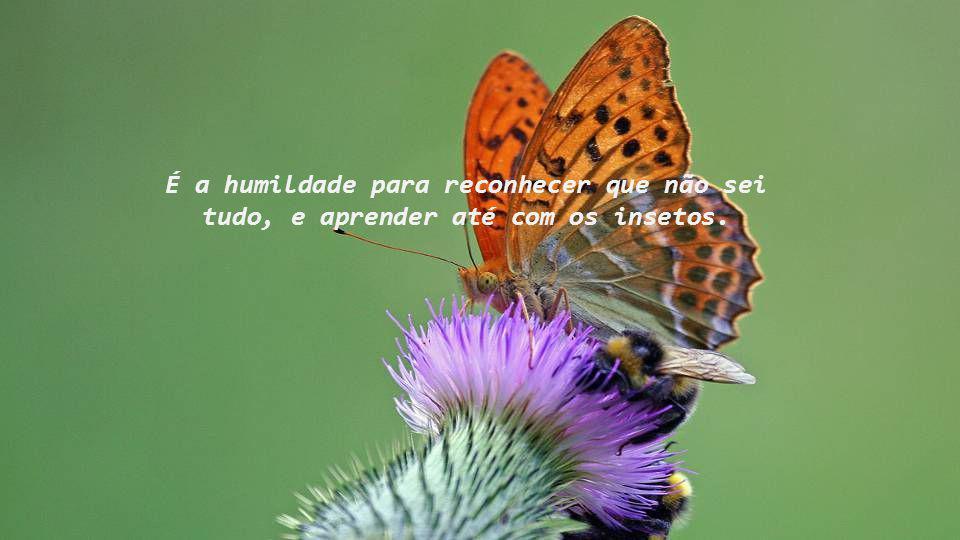É a humildade para reconhecer que não sei tudo, e aprender até com os insetos.