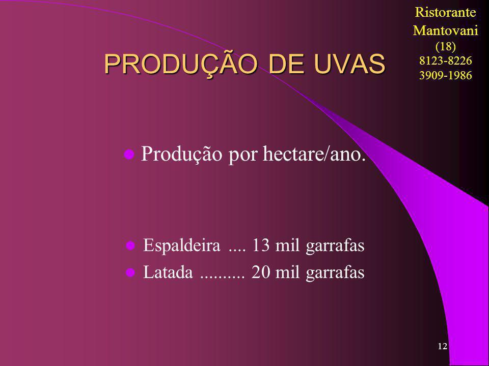 PRODUÇÃO DE UVAS Produção por hectare/ano.