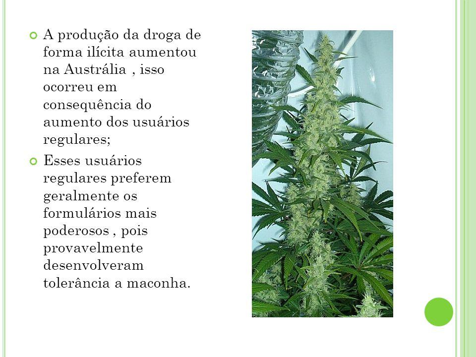 A produção da droga de forma ilícita aumentou na Austrália , isso ocorreu em consequência do aumento dos usuários regulares;