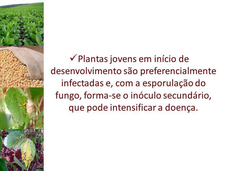 Plantas jovens em início de desenvolvimento são preferencialmente infectadas e, com a esporulação do fungo, forma-se o inóculo secundário, que pode intensificar a doença.