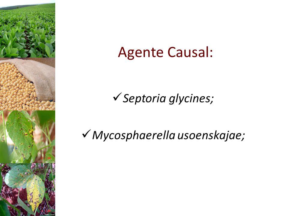 Mycosphaerella usoenskajae;