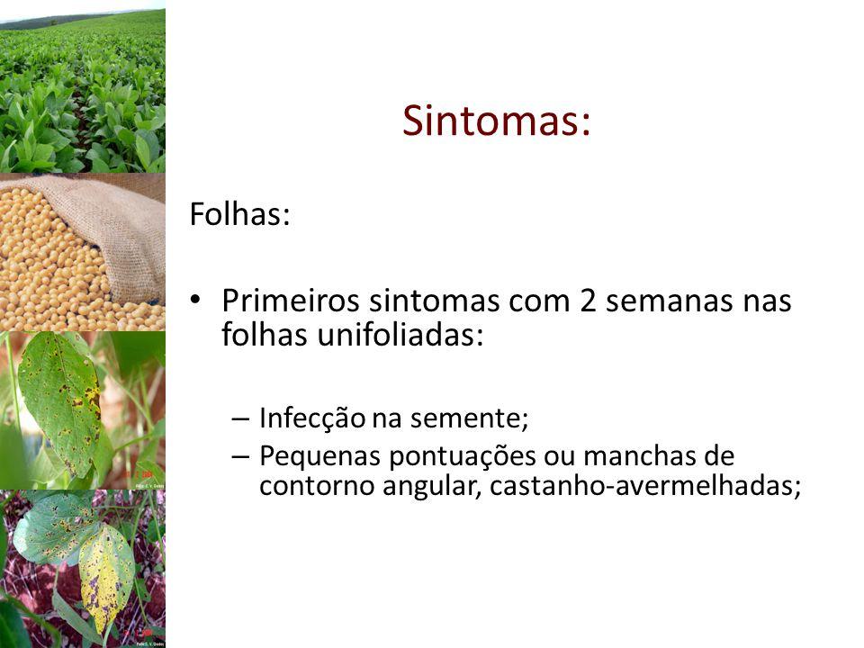 Sintomas: Folhas: Primeiros sintomas com 2 semanas nas folhas unifoliadas: Infecção na semente;