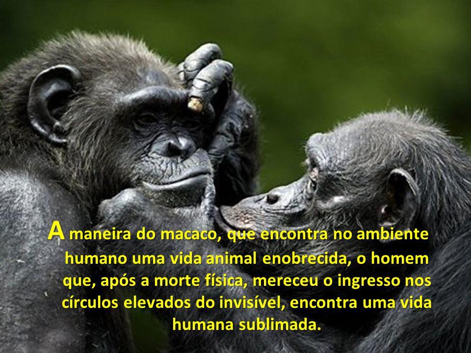A maneira do macaco, que encontra no ambiente humano uma vida animal enobrecida, o homem que, após a morte física, mereceu o ingresso nos círculos elevados do invisível, encontra uma vida humana sublimada.