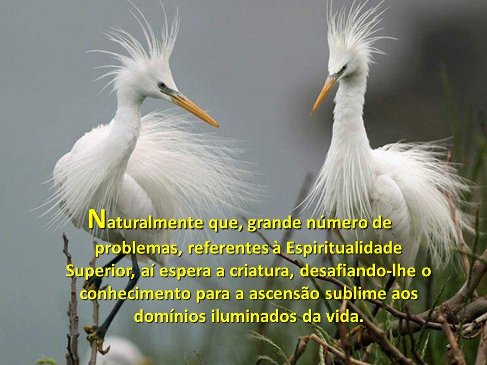 Naturalmente que, grande número de problemas, referentes à Espiritualidade Superior, aí espera a criatura, desafiando-lhe o conhecimento para a ascensão sublime aos domínios iluminados da vida.