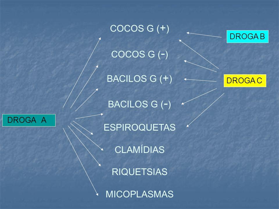 COCOS G (+) COCOS G (-) BACILOS G (+) BACILOS G (-) ESPIROQUETAS CLAMÍDIAS RIQUETSIAS MICOPLASMAS