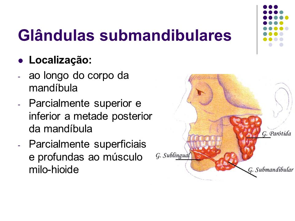Glândulas submandibulares