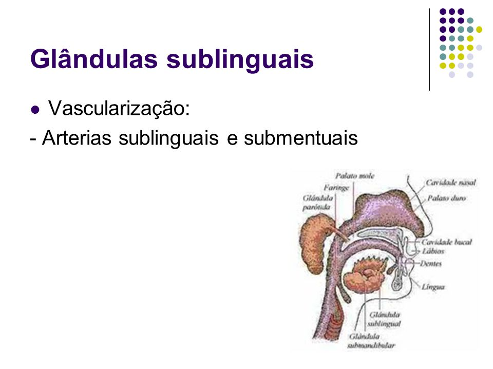 Glândulas sublinguais