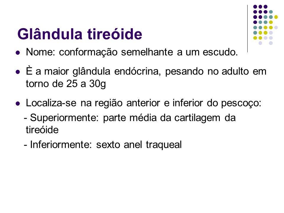 Glândula tireóide Nome: conformação semelhante a um escudo.