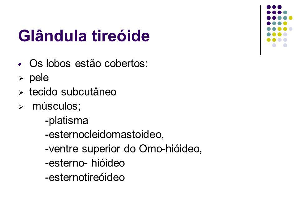 Glândula tireóide Os lobos estão cobertos: pele tecido subcutâneo