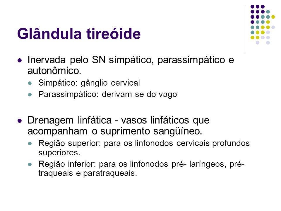 Glândula tireóide Inervada pelo SN simpático, parassimpático e autonômico. Simpático: gânglio cervical.